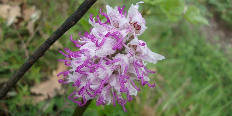 > 21-22/05 – Weekend Orchidee Selvatiche