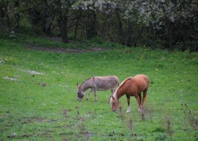 L'Infernaccio e la Primavera alla Cittadella dei Monti Sibillini10
