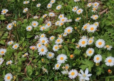 L'Infernaccio e la Primavera alla Cittadella dei Monti Sibillini11