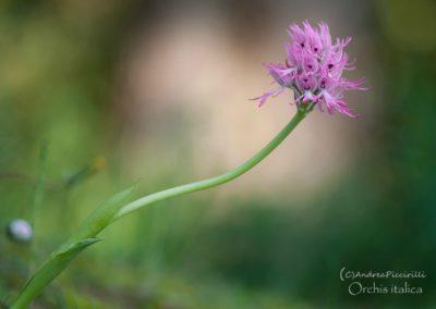 Weekend delle Orchidee alla Cittadella dei Sibillini