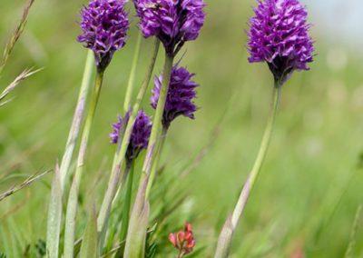 Weekend delle Orchidee alla Cittadella dei Sibillini4