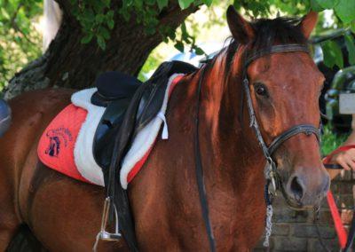 Weekend del Cavallo all Agriturismo La Cittadella di Montemonaco51