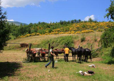 Weekend del Cavallo all Agriturismo La Cittadella di Montemonaco55