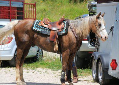 Weekend del Cavallo all Agriturismo La Cittadella di Montemonaco63