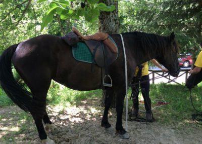 Weekend del Cavallo all Agriturismo La Cittadella di Montemonaco64
