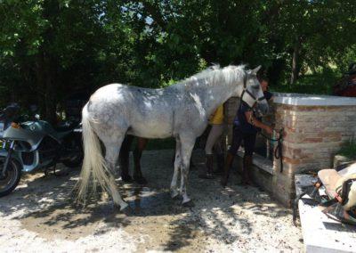 Weekend del Cavallo all Agriturismo La Cittadella di Montemonaco65