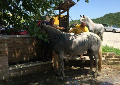 Weekend del Cavallo all Agriturismo La Cittadella di Montemonaco68