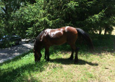 Weekend del Cavallo all Agriturismo La Cittadella di Montemonaco69