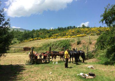 Weekend del Cavallo all Agriturismo La Cittadella di Montemonaco70