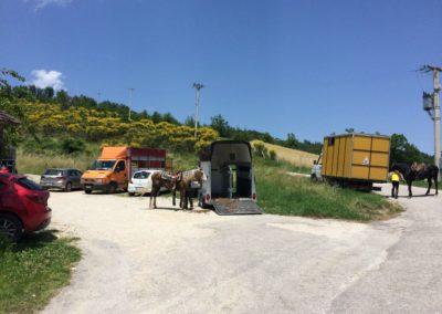 Weekend del Cavallo all Agriturismo La Cittadella di Montemonaco72