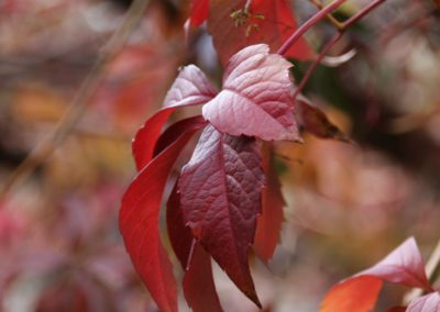 autunno-alla-cittadella-di-montemonaco