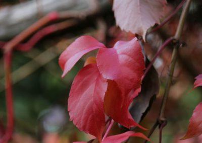 autunno-alla-cittadella-di-montemonaco29