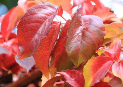 autunno-e-castagne-alla-cittadella-di-montemonaco-sui-monti-sibillini