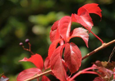 autunno-e-castagne-alla-cittadella-di-montemonaco-sui-monti-sibillini33