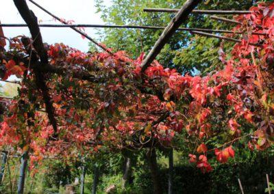 autunno-e-castagne-alla-cittadella-di-montemonaco-sui-monti-sibillini34