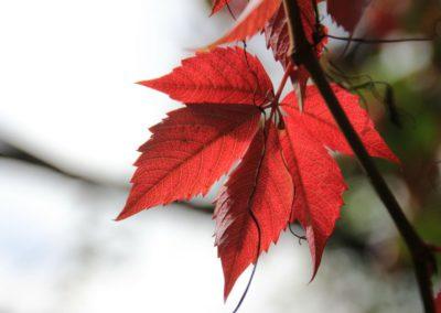 autunno-e-castagne-alla-cittadella-di-montemonaco-sui-monti-sibillini36