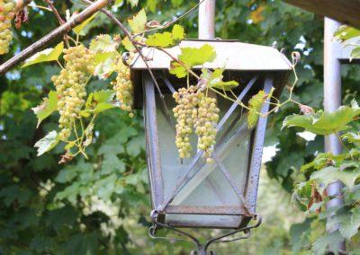autunno-e-castagne-alla-cittadella-di-montemonaco-sui-monti-sibillini6